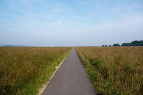 Eindeloze weg in het nationale park de Hoge Veluwe