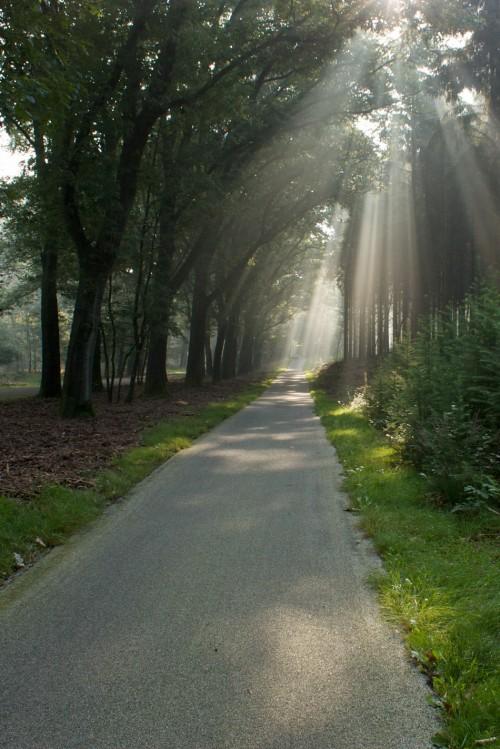 Zonnestralen in het nationale park de Hoge Veluwe
