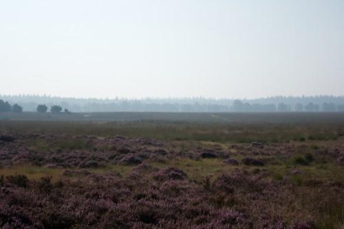 Laagjes in het nationale park de Hoge Veluwe